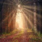 hope, nature, forest