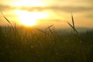 grass, sunrise, sun
